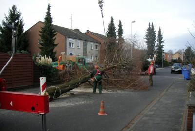 Pflanzen Baumfällung Rohdung Gartenbau Landschaftsbau Erftstadt Köln